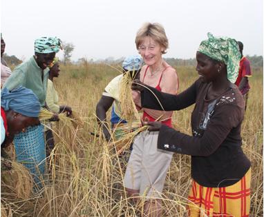 Tinting utvikling gjest hjelper å høste ris
